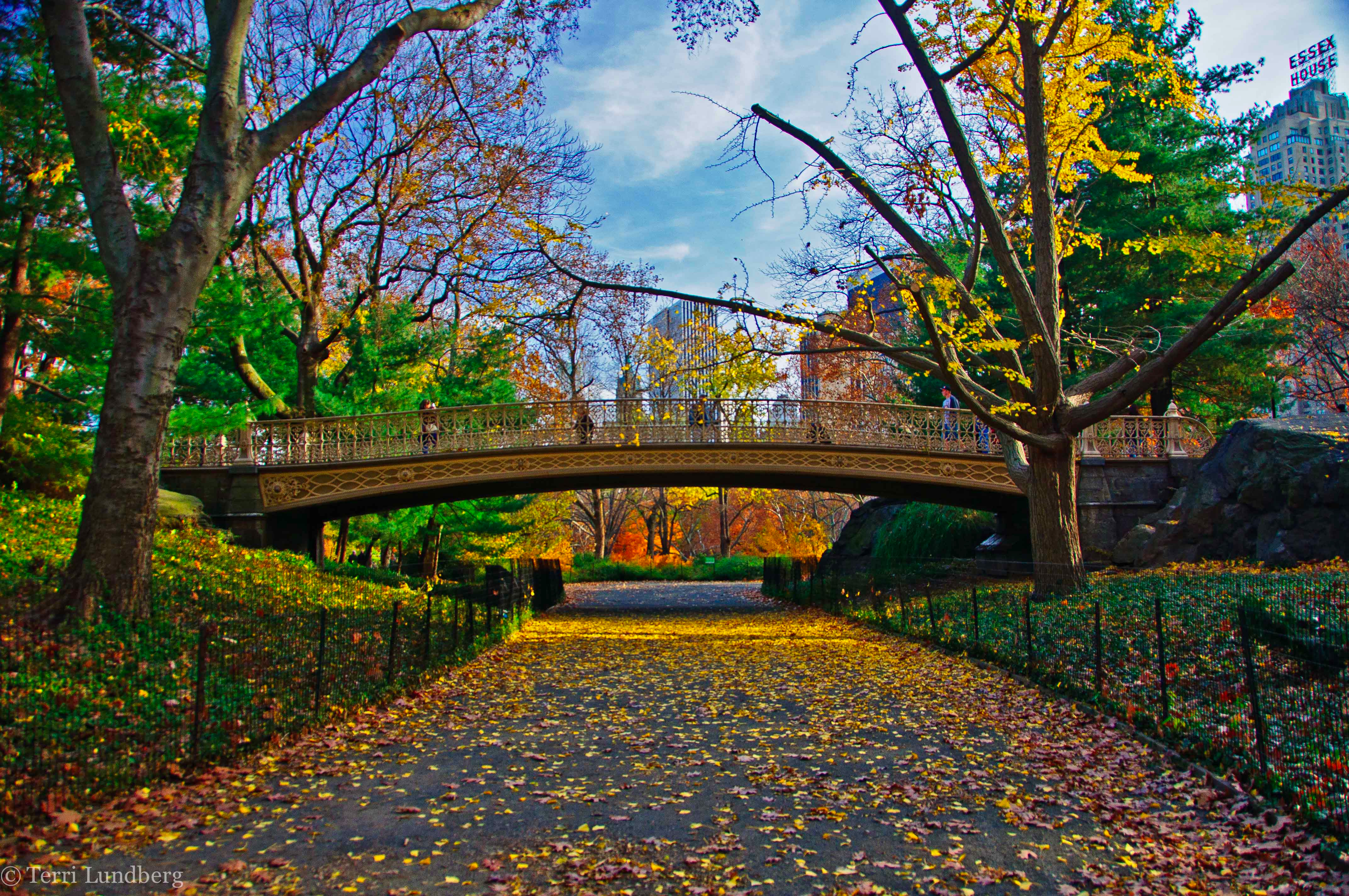 Fall Foliage in Central Park over Gothic Bridge