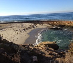 La Jolla Cove Seals