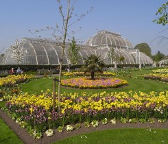 The Palm House and Parterre at Kew Gardens
