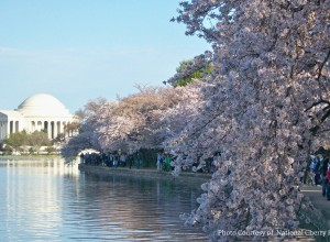Five Fabulous Free Things to Do in DC