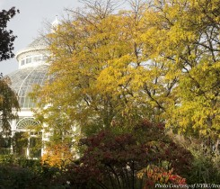 Beautiful fall foliage with the Conservatory in the background. Fall Color at The New York Botanical Garden are a sight to see