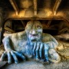 Fremont Troll Courtest of Michael Matti