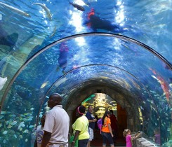 Mayan Reef Aquarium of the Americas
