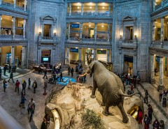 National Museum of Natural History Courtesy of Philip Cohen